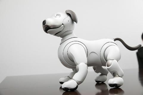 新型aiboは結構スマート。成犬に近いプロポーションをしている