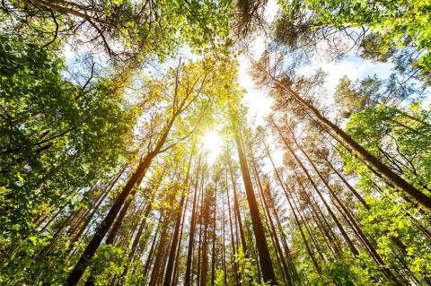 森林浴は「何もしない」ことが刺激になる(写真/Shutterstock)
