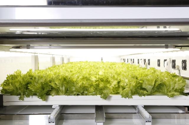 MaaSの普及によって、小型の植物工場が都市部で大増殖する?