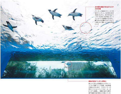 """サンシャイン水族館のV字回復 """"制約""""が生んだ新発想で(画像)"""