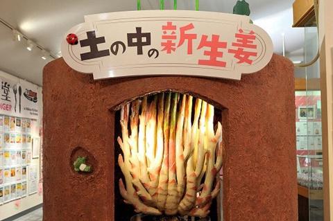 岩下の新生姜は、台湾のみで栽培される特殊な生姜「本島姜(ペンタオジャン)」を使用。土をかけることで芽の部分を伸ばし、やわらかくく辛みの少ない生姜となる