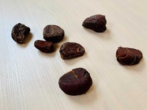 アフリカ原産の植物「コラ」の果実がコーラナッツ。カフェインを多く含む