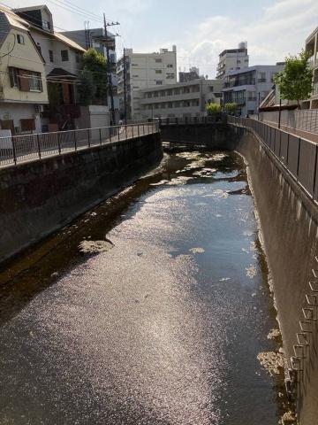 スマートHDR機能をオンにして撮影。川の水面の反射を抑えながら立体感に富んだ写真が撮れる