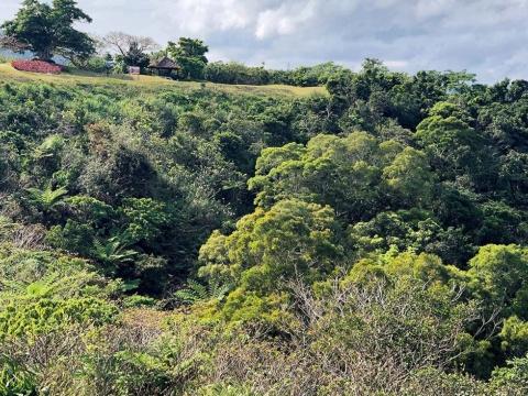 今帰仁村にあるオリオン系のゴルフ場に建設予定。様々な木でうっそうとしたやんばるの森は外国人観光客の心をつかむという