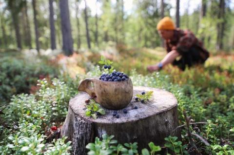 フィンランドでは週末にアウトドアを楽しむ人も多い。ベリー摘み、きのこ狩り、釣り、キャンプなどのアクティビティーを行う(写真提供/Visit Finland)