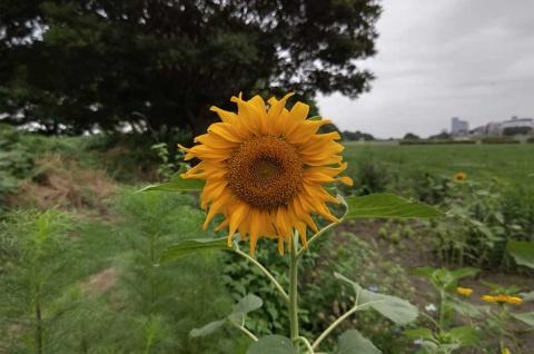 花での作例。近づいて撮影すれば、ほとんどのものはきれいに背景がぼける