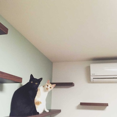 ネコ共生型賃貸の壁にはキャットウォークが取り付けられている物件が多い