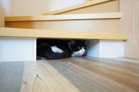 階段の下に隠れる場所もある