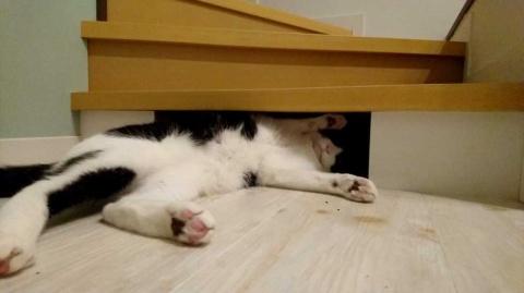 こうした住空間の工夫は、ネコ好きでなければ分からないかも……