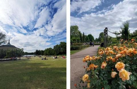 このところ気温が25度前後になる日も多く、きれいな青空が広がるロンドン。ロンドン最大の王立公園リージェンツ・パーク(Regent's Park)の園内にあるローズガーデンで、「keep smiling」という品種の黄色いバラを見つけました。今は、花の名前も「こういうときだからこそ笑顔でもう少し頑張ろう」というメッセージのように感じます
