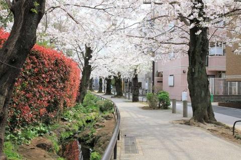 3位の「世田谷代田」。駅の西側には梅林やプレーパークのある羽根木公園もあり、子育てしやすい環境