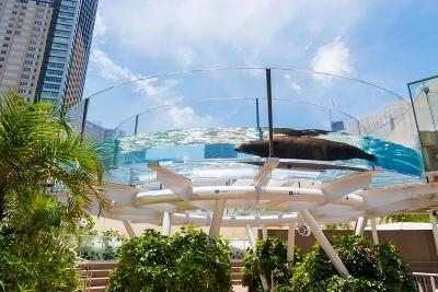 頭上をアシカが泳ぐ「サンシャインアクアリング」はサンシャイン水族館の名物