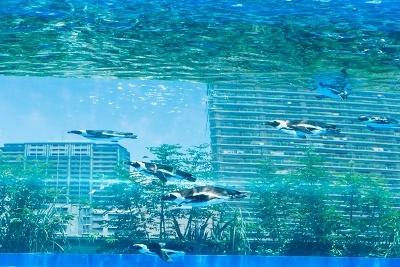 ビルの屋上から見える風景とペンギンが泳ぐ姿が重なって見える