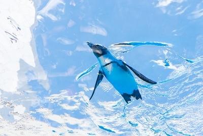 屋根の部分でもペンギンが泳いでいる