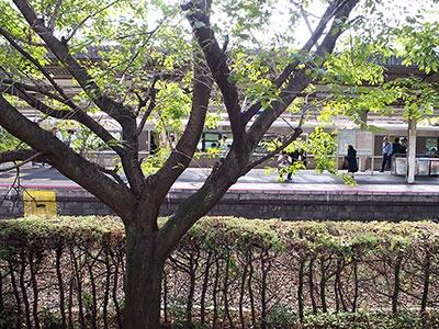 JR大津駅のプラットホームとほぼ同じ高さにあり、すぐそばを特急が走り過ぎていく