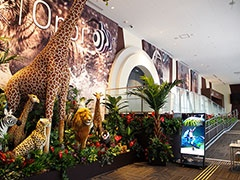 英国BBC EARTHコンテンツ・プロダクションとのコラボにより、セガがプロデュースする大自然体感型エンターテインメント施設「オービィ大阪」は2016年開業予定