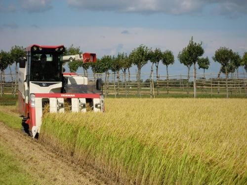 髙塚氏の米の作付面積は16ヘクタールほどだが、生産開始3年がたった現在、そのうち5.1ヘクタールが新之助だ。「ニーズが増えれば、もっと面積を増やしたい」と話す(写真提供:髙塚俊郎氏)