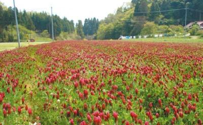 赤い花が咲いたハーブ