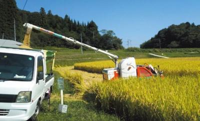 実った稲を収穫