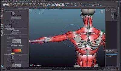 骨格に加え、それを覆う筋肉、脂肪、皮膚など、見えない部分までモデルを作り、徹底的にシミュレートしている