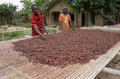「メイジ・カカオ・サポート(MCS)」ではカカオ豆生産を持続可能にするために社員が生産国を定期的に訪問。井戸や蚊帳の寄贈、苗木センターの開設、ファーマー・トレーニング・スクールの開催などさまざまな支援を行っている