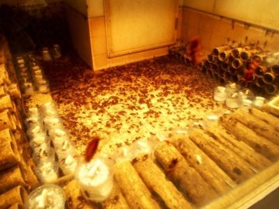 狭くて暗い場所が好きなゴキブリの習性を考慮して作られたのが、紙製の筒を何層にも重ねたゴキブリのマンション