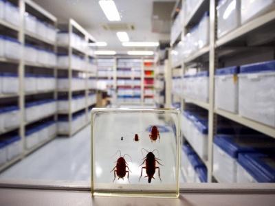 ゴキブリの飼育室の棚には、400~1000匹入ったケースが約300個。昆虫供給依頼書という伝票が届くと、必要な時期までに必要な量だけ供給できるように管理している