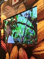 ビデオでは明治チョコレートのカカオの産地についても触れていた