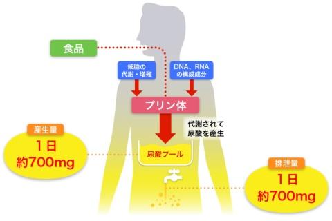 細胞の代謝・増殖などに利用されるプリン体のうち、利用されない一部は尿酸として体外に排出される。過剰摂取してしまうと、尿酸値が上昇し、高尿酸血症や痛風の発症リスクにもつながってしまう